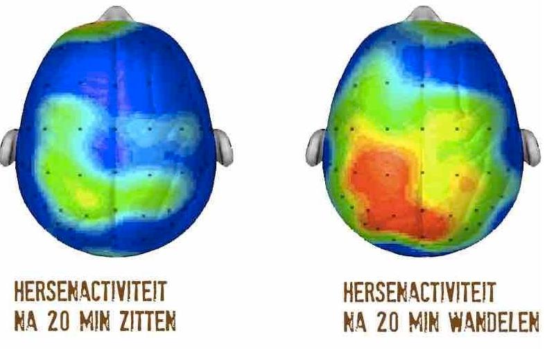 hersenactiviteit-bij-beweging-en-stil-zitten
